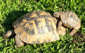 small loans large and tiny tortoise